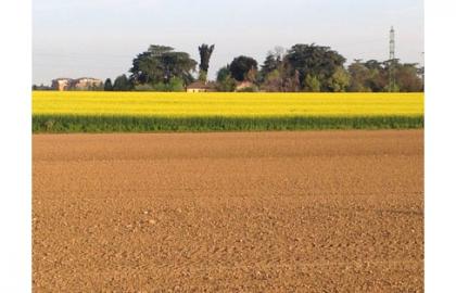 Per il 2015 non solo soia ma anche favino e colza consulente agronomo - Letto di semina ...