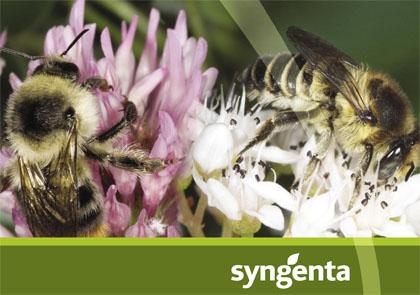syngenta_pollinator