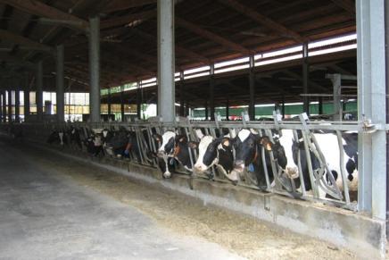 Come produrre latte con l'agricoltura sostenibile