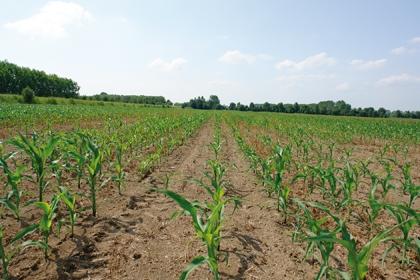 nova_campo_2013_prove_agronomiche