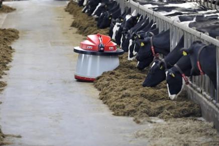 In stalla robot in azione tra le bovine
