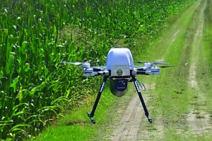 Calabroni telecomandati per impollinare, alternativa ai droni