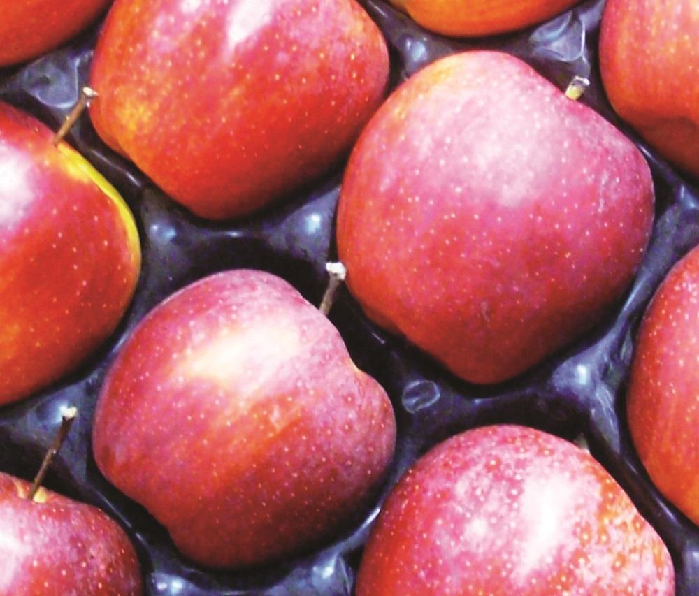 Tante nuove variet di mele - Immagini stampabili di mele ...