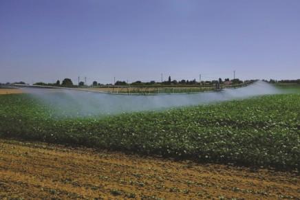 L'irrigazione ricopre un ruolo fondamentale per la coltura del fagiolino