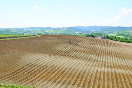 Innovazione e ricerca in agricoltura, aperti i bandi in Basilicata