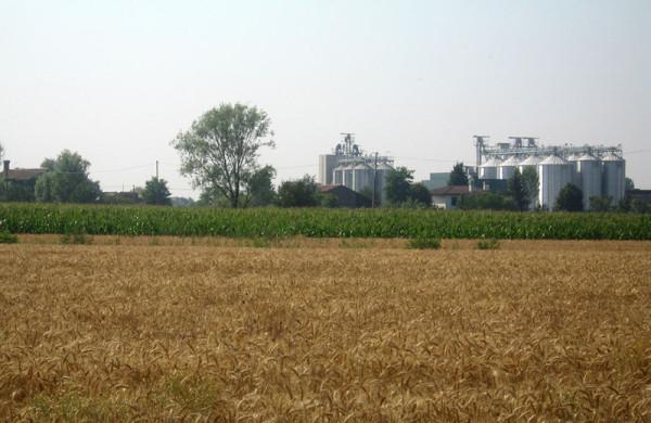 Nova in campo 2016, le produzioni di Agricola Grains