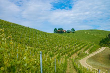 """""""Vino Libero"""", la viticoltura innovativa ora è certificata"""