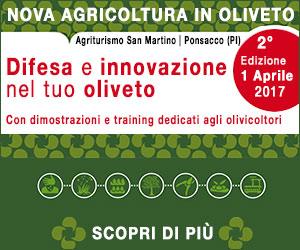 scroll_oliveto_2