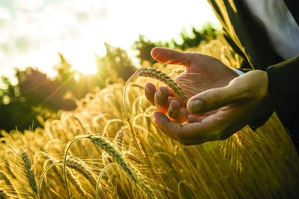 L'impegno di Syngenta per un'agricoltura più sostenibile