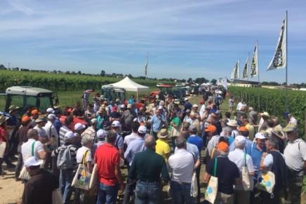 Nova Agricoltura in Vigneto, sostenibilità prima di tutto