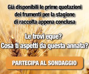 Sondaggio_grano
