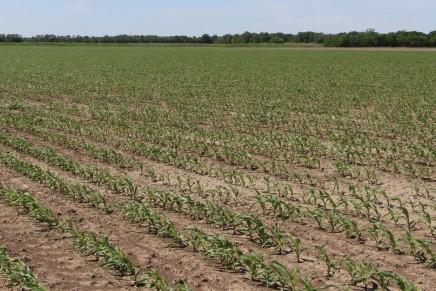 Risparmio idrico, subirrigazione e fertirrigazione a confronto