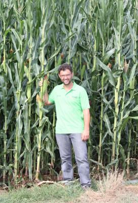 subirrigazione