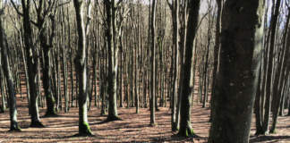 gestione forestale