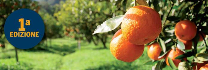 Nova Agricoltura in Agrumeto 2019, appuntamento in Sicilia